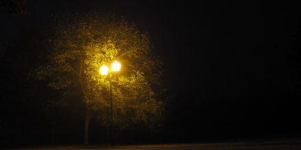 L'Arbre et le lampadaire