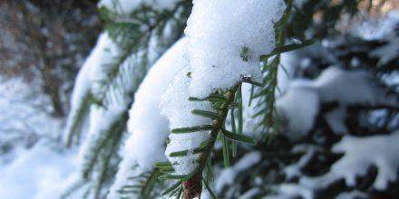 La neige et le sapin